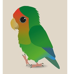 Cute lovebird vector