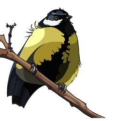 Bird titmouse sitting on a branch vector image