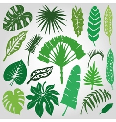 Tropical palm leavesbranches setSilhouetteGreen vector image