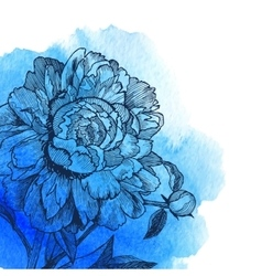 Ink drawn peony at blue watercolor vector
