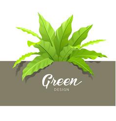 green asplenium nidus design vector image vector image