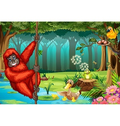 Orangutan in jungle vector image vector image