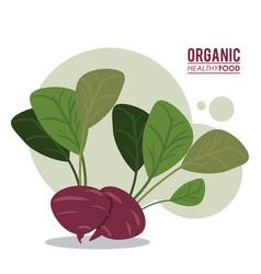 Organic healthy food beet diet vector