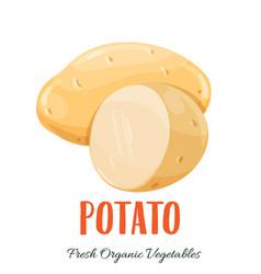 potato vegetable vector image vector image