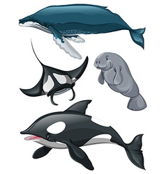 Different kind of whales and fish vector