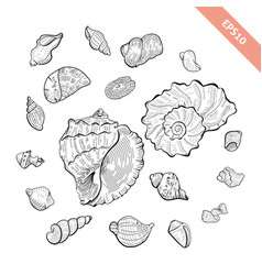 hand drawn seashell collection sketch style vector image