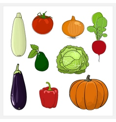 Set of vegetable isolated on white background vector