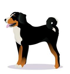 Appenzeller sennenhund dog vector