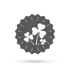 Clovers with three leaves sign St Patrick vector image