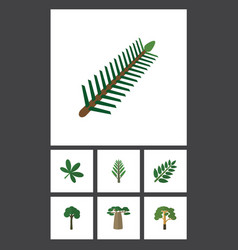 Flat icon natural set of wood spruce leaves vector