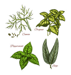 Sketch icons of spice and herb dressings vector