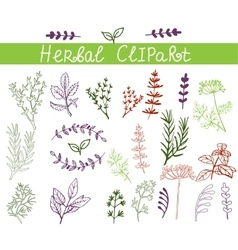 background hand drawn herbs and spices set vector image