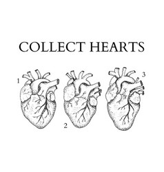 dotwork collect human hearts vector image