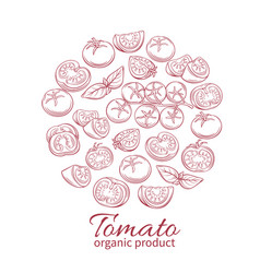 hand drawn tomato icons set vector image vector image