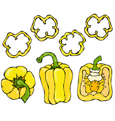 Yellow bell peper set half of sweet paprika and vector