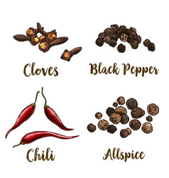 Full color realistic sketch of spices vector