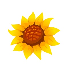 icon sunflower vector image vector image