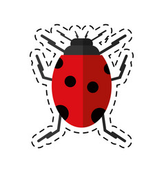 Cartoon ladybug insect nature icon vector
