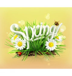 Spring time for a picnic grass flowers of camomile vector image vector image