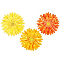 Yellow and orange gerbers vector
