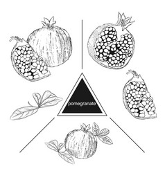 set of fruits pomegranate a piece of pomegranate vector image