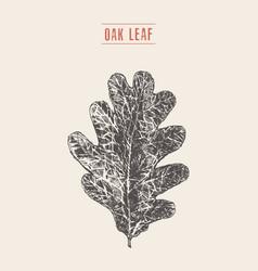 Oak leaf hand drawn sketch vector