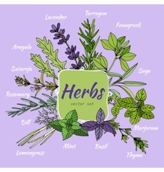 Set of herbs for food and cosmetic vector image vector image