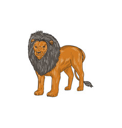 Lion hunting surveying prey drawing vector