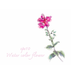 Water color flower on white background vector image vector image