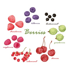 Set of colored hand draw graphic berries vector