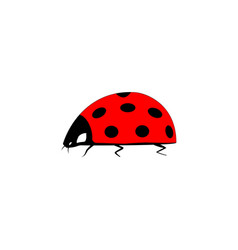 ladybird isolated vector image