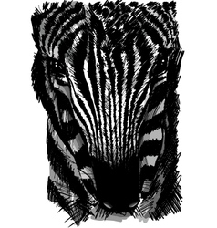 Sketch of a zebra head vector