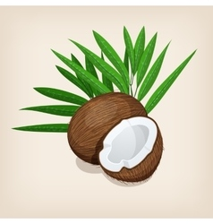 Whole and half coconut with leaves vector