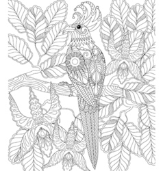 Exotic tropical zentangle bird for adult anti vector