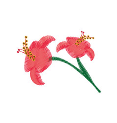 drawing hibiscus flower ornament image vector image