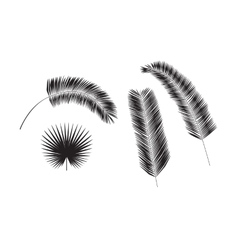 Set of palm tree leaves silhouettes isolated on vector image