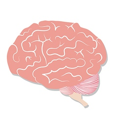 Brain on white background vector