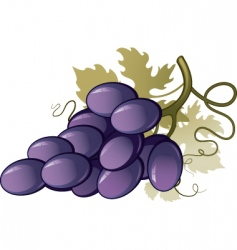 vineyard vector image vector image
