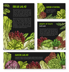 Salads and leafy lettuce templates posters vector