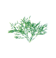 green shrub isolated vector image vector image