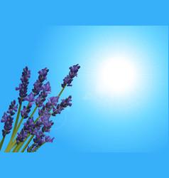 Lavender closeup on sunny blue sky vector