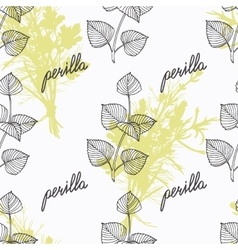 Hand drawn perilla herb branch and handwritten vector