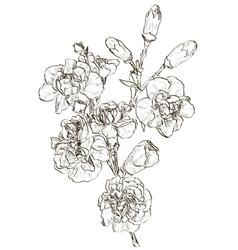 Hand drawn carnation flower sketch vector