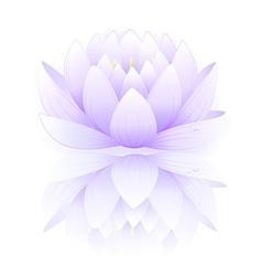 Blue lotus vector