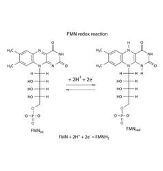 Fmn redox reaction vector