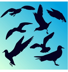 seagull silhouettes vector image