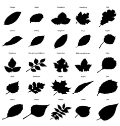 Black silhouettes of foliage vector image