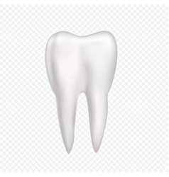 Tooth on transparent background vector