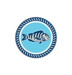 Sheepshead fish rope circle retro vector
