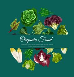Leafy salads vegetables poster vector